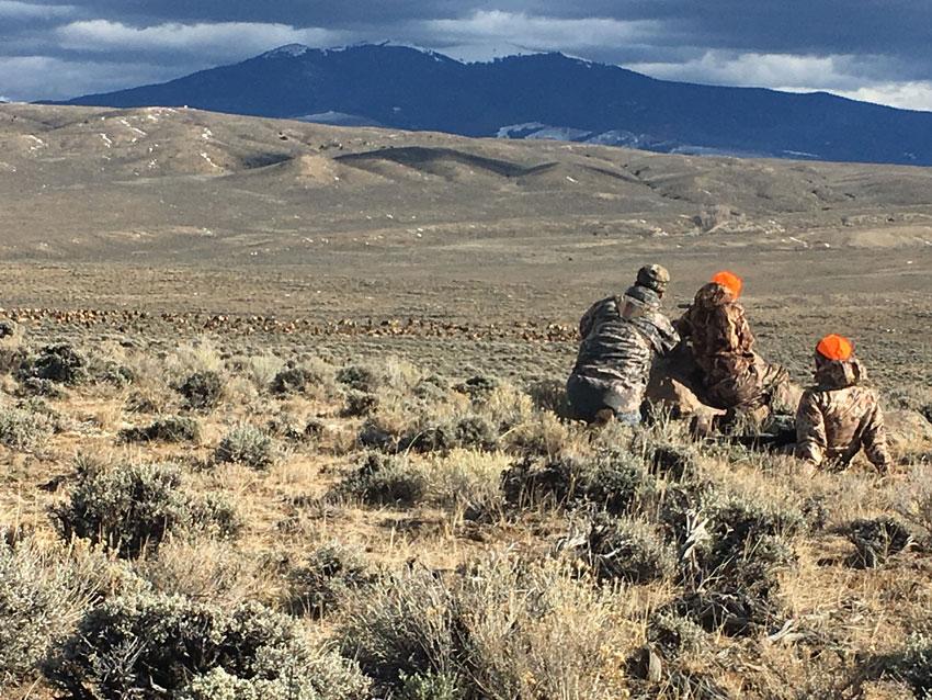 Grand Slam Outfitters - Elk Herd - Saratoga Wyoming