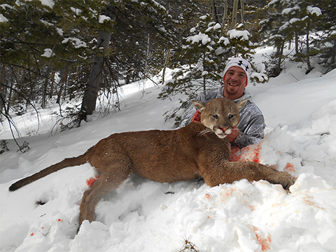 Grand Slam Outfitters Mountain Lion Hunting